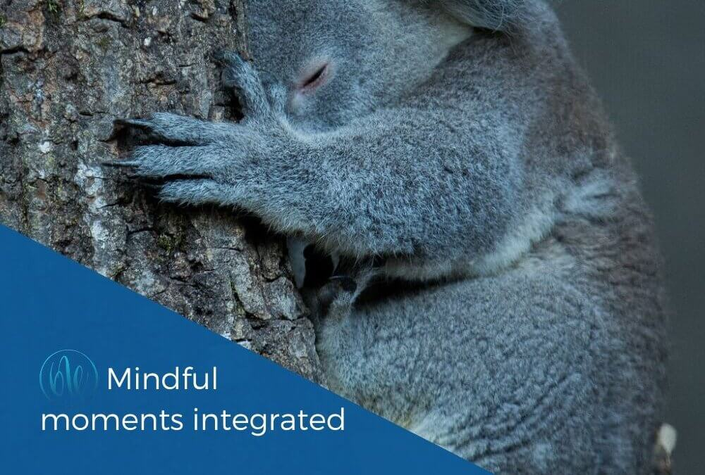 Compassion – Mindful moments integrated
